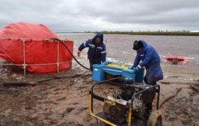 Биологическая рекультивация загрязненных земель в Норильске